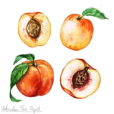 Watercolor Food Clipart - Apricot and Peach Stok Fotoğraf