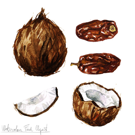 dates fruit: Watercolor Food Clipart - Coconut and Date