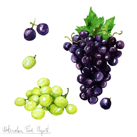 food clipart: Watercolor Food Clipart - Grapes