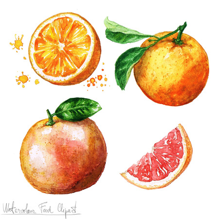 mandarin orange: Watercolor Food Clipart - Orange and Grapefruit