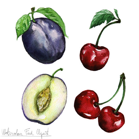 cheery: Watercolor Food Clipart - Plum and Cheery