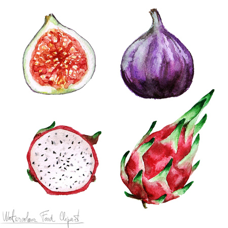 tropical fruit: Watercolor Food Clipart - Pitaya and Fig Stock Photo