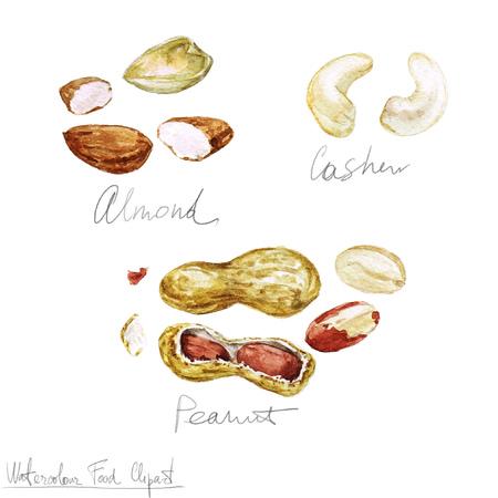 Watercolor Food Clipart - Nuts Stok Fotoğraf