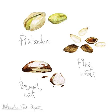 Watercolor Food Clipart - Nuts Zdjęcie Seryjne