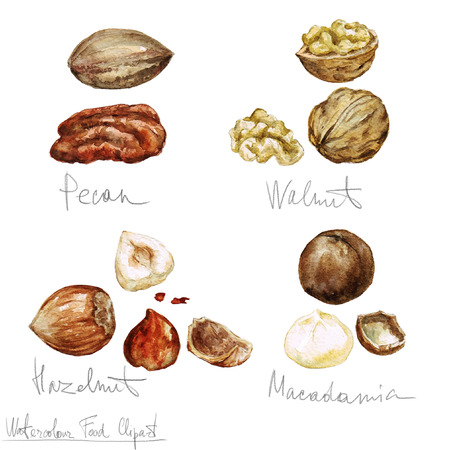 pecan: Watercolor Food Clipart - Nuts Stock Photo