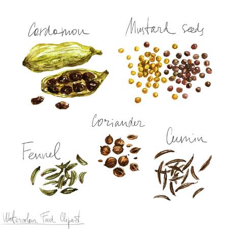 Aquarelle alimentaire Clipart - Épices