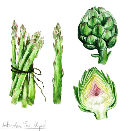 Watercolor Food Clipart - Asparagus and Artichoke Stok Fotoğraf - 53245588
