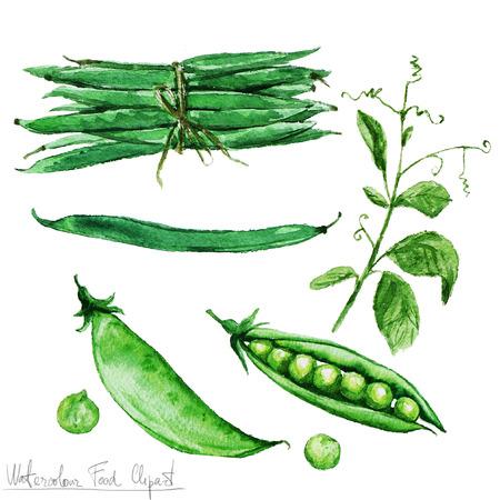 수채화 음식 클립 아트 - 녹색 콩과 완두콩 스톡 콘텐츠