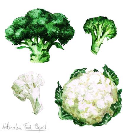 Waterverf het voedsel clipart - Bloemkool en broccoli Stockfoto
