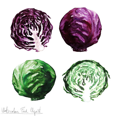 Watercolor Food Clipart - Cabbage