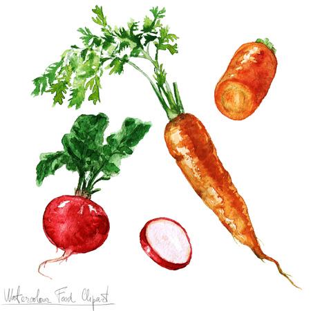 水彩食べ物クリップアート - ニンジンと大根