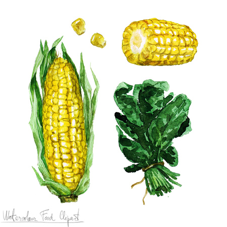 spinach: Watercolor Food Clipart - Corn and Spinach Stock Photo