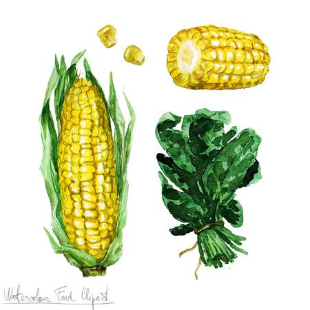 Watercolor Food Clipart - Corn and Spinach Banco de Imagens