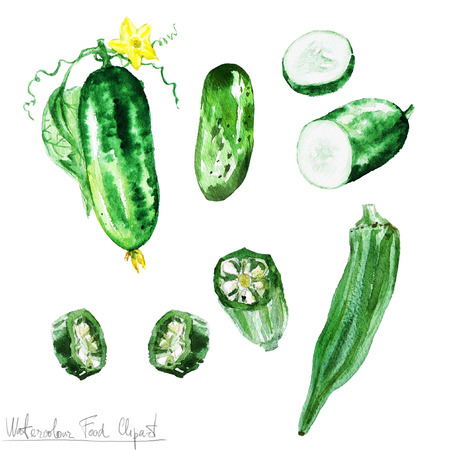 cucumber slice: Watercolor Food Clipart - Cucumber and Okra