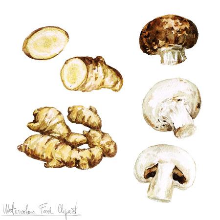 planta con raiz: Acuarela Alimentos clipart - jengibre y champiñones Foto de archivo