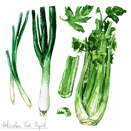 Watercolor Food Clipart - Celery, leek and spring onions