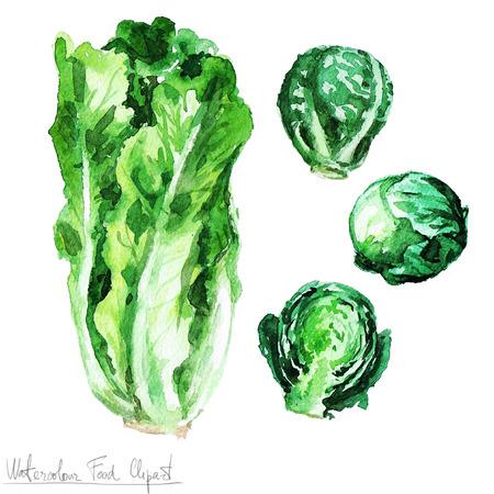 수채화 음식 클립 아트 - 양상추와 콩나물 스톡 콘텐츠