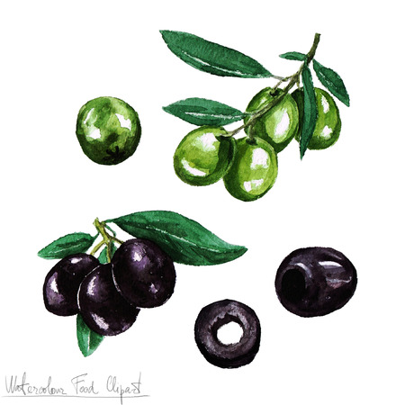 italian chef: Watercolor Food Clipart - Olive Stock Photo
