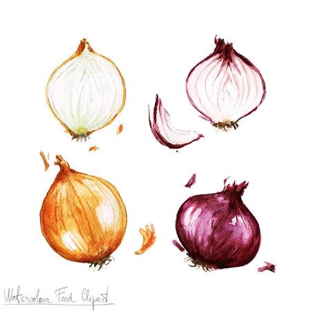 水彩食べ物クリップアート - タマネギ 写真素材
