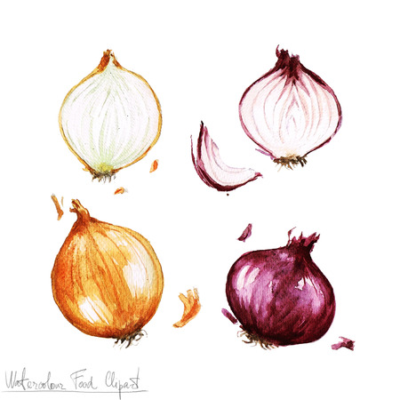 onion: Watercolor Food Clipart - Onion