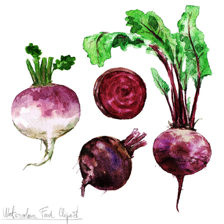 beetroot: Watercolor Food Clipart - Beetroot and Turnip