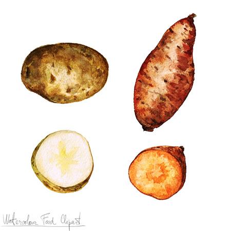 potato plant: Watercolor Food Clipart - Potato