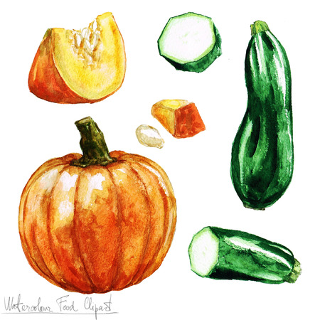 Watercolor Food Clipart - Pumpkin and Zucchini