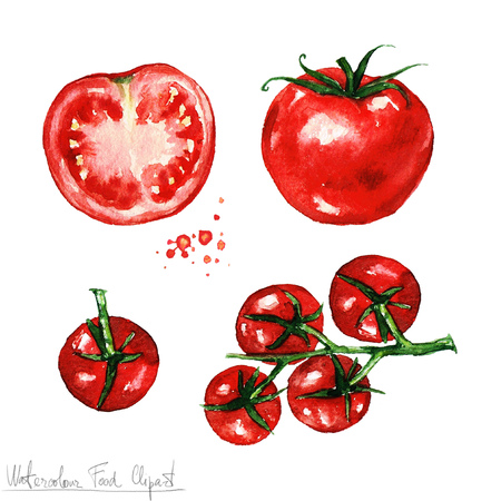 grocery shopping: Watercolor Food Clipart - Tomato
