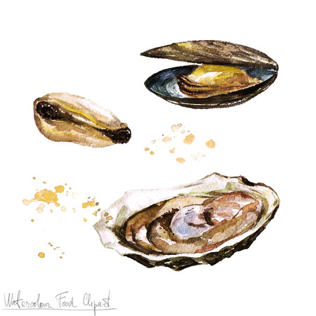 Watercolor Food Clipart - Oyster and Mussel
