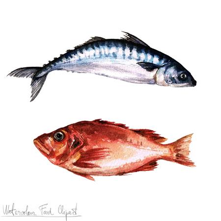 Acuarela Alimentos clipart - Pescado Foto de archivo