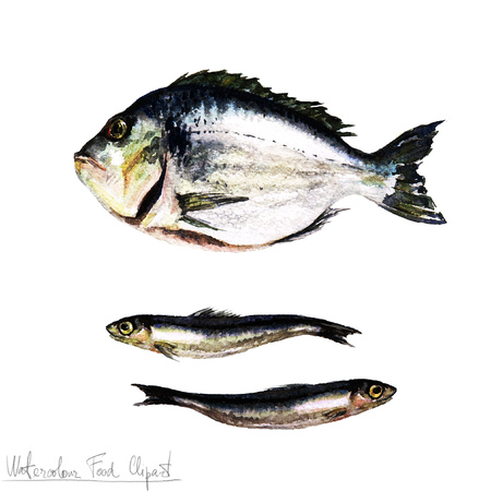 fishy: Watercolor Food Clipart - Fish