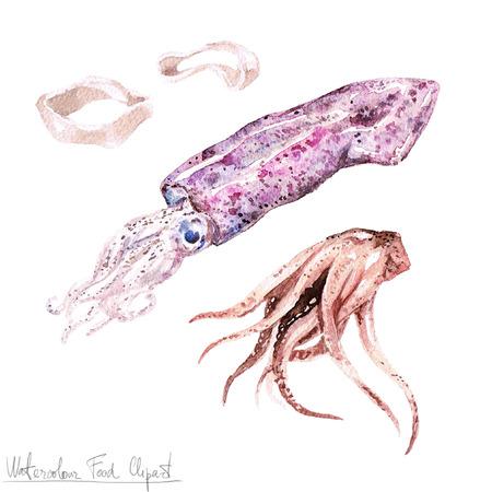 Watercolor Food Clipart - Calamari