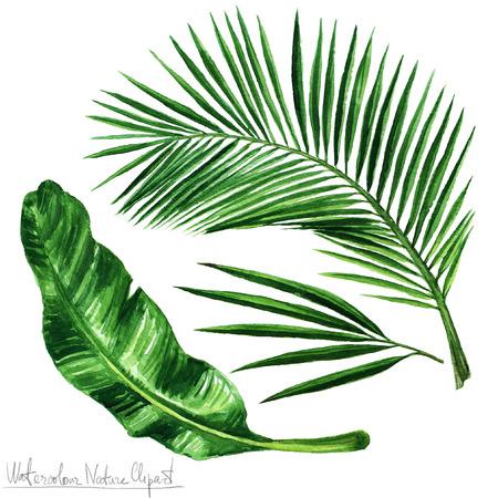 水彩自然クリップアート - ヤシの葉