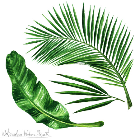 Watercolor Nature Clipart - Palm bladeren