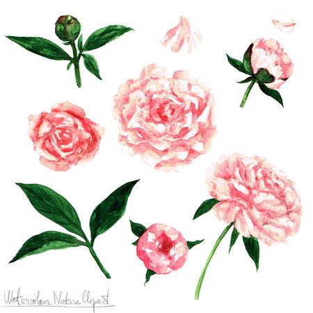pink vintage: Watercolor Nature Clipart - Flowers