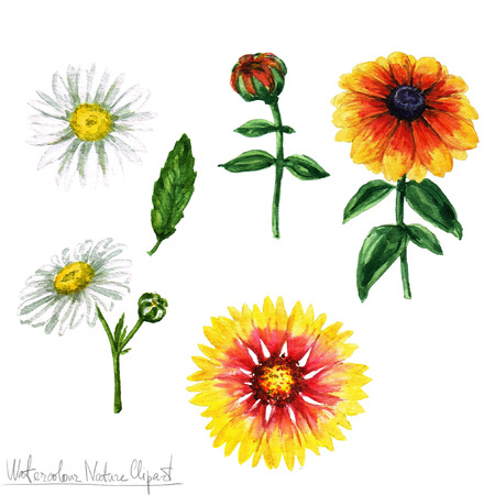 hand painted: Watercolor Nature Clipart - Flowers