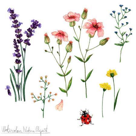 Aquarell Natur Clipart - Blumen Standard-Bild - 56638792