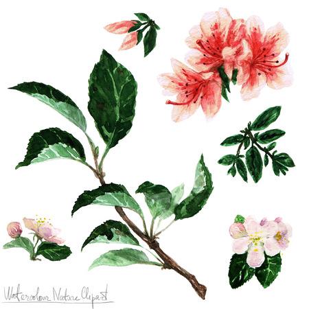 retro illustration: Watercolor Nature Clipart - Flowers