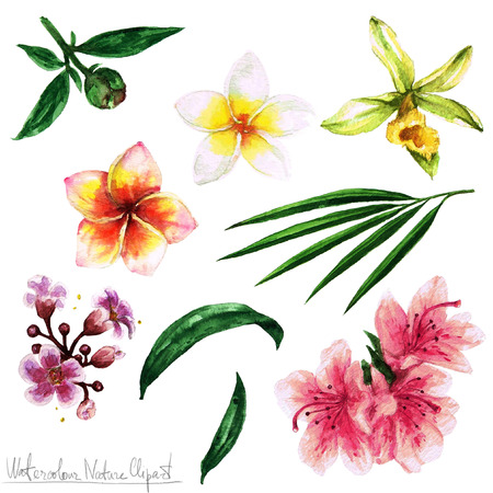 pink plumeria: Watercolor Nature Clipart - Flowers