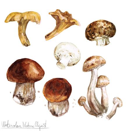 水彩自然クリップアート - キノコ 写真素材