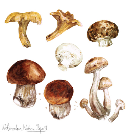 Watercolor Nature Clipart - Mushrooms