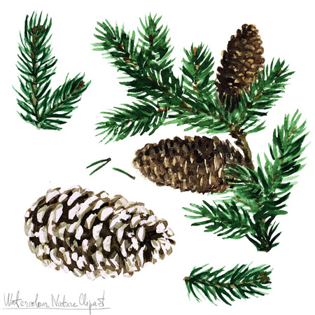 pinetree: Watercolor Nature Clipart - Pine