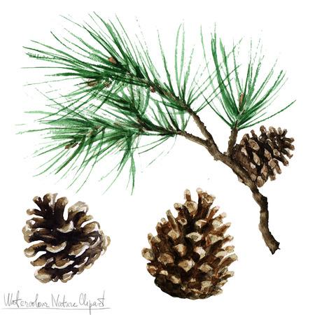 arbol de pino: Naturaleza de la acuarela Ilustraciones - Pino