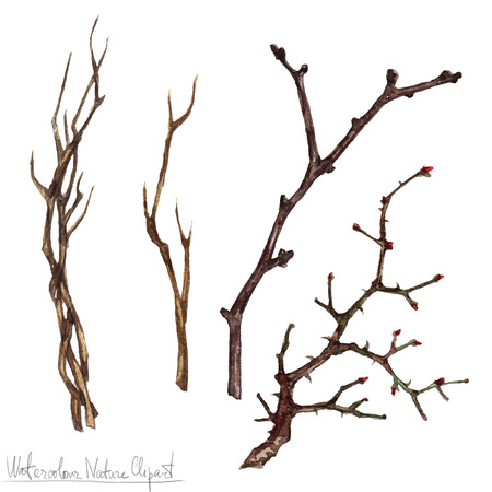 tree branch: Watercolor Nature Clipart - Twigs Stock Photo
