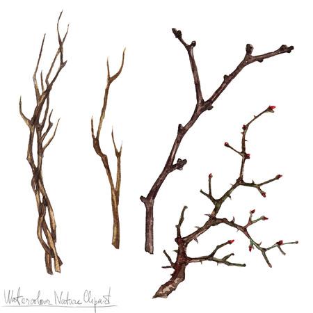 autumn tree: Watercolor Nature Clipart - Twigs Stock Photo