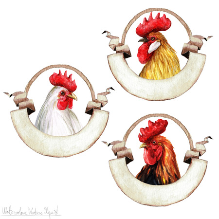 capon: Watercolor Rooster Labels, Isolated