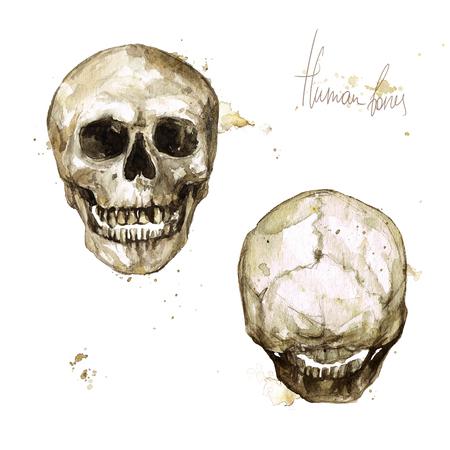 인간의 두개골. 수채화 그림. 스톡 콘텐츠 - 97766710