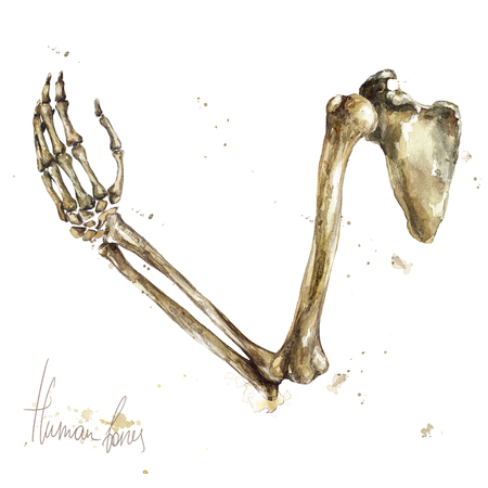 Human Bones. Watercolor Illustration. Standard-Bild - 97766762