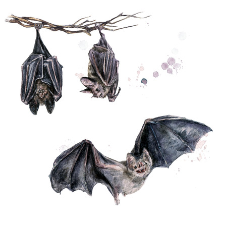 Bats. Watercolor Illustration. Stock Photo