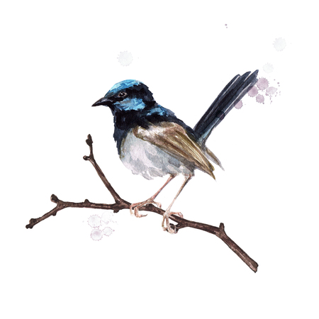 Bird sitting on a twig. Watercolor Illustration.